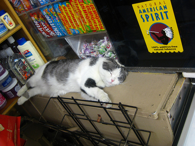 A-Rod Grocery Cat